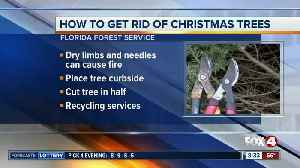 How to safely get rid of Christmas trees after the holiday [Video]