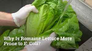 Why Is Romaine Lettuce Having E Coli Issues [Video]