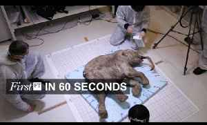 DNA sequencing of Mammoths a success | FirstFT [Video]