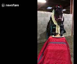 Horse enjoying his Christmas Dinner [Video]
