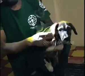 Volunteers rescue dog trapped between two walls in south India city [Video]
