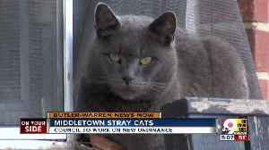 Middletown stray cats [Video]