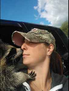Raccoon reunites with rescuer after year apart [Video]