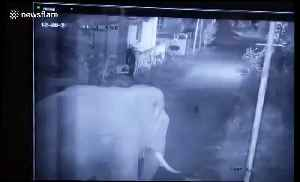 Security, we have a big problem! Herd of seven elephants enters residential compound [Video]