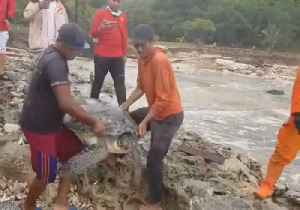 Turtles Rescued After Being Stranded Inland by Indonesian Tsunami [Video]