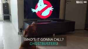 Dog howls to 'Ghostbusters' theme song [Video]