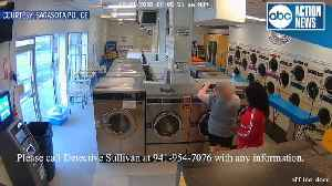Sarasota police search for suspect who robbed laundromat, locked employee in bathroom | Surveillance video [Video]