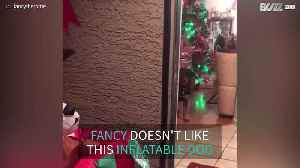 Rottweiler reacts to Christmas decoration [Video]