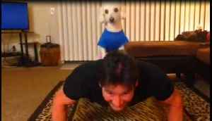 Small dog acts as owner's personal trainer [Video]