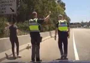 No Fowl Play: Victoria Police Help Family of Ducks Cross Freeway [Video]