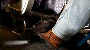 Airlines Are Cracking Down On Support Animals [Video]