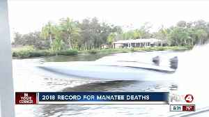 Manatee Tour Guide gives solutions to manatee death toll [Video]
