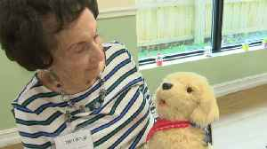 Robotic Pets Are Given to People with Dementia in Study on Social Therapy [Video]
