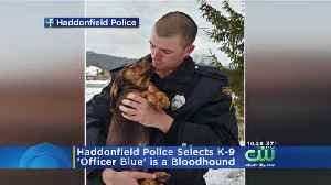 New Canine Joining Haddonfield Police Force [Video]