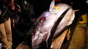 Tuna sells for record $3 million at Tokyo auction [Video]