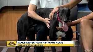 Rescues in Action Jan. 5   Make Derek your new pal [Video]