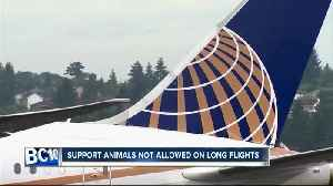 United's new rule for support animals takes effect [Video]