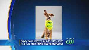 2 Local Dogs Named After Eagles Competing In This Year's Puppy Bowl [Video]