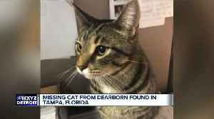 Missing Michigan cat somehow turns up in Tampa, Florida [Video]