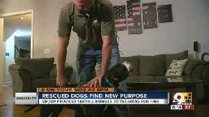 Rescued dogs find new purpose [Video]