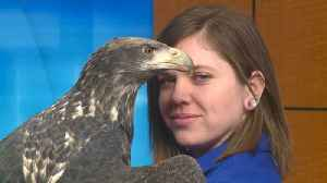 Live in studio: Latch the eagle and his crew [Video]