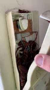 Roach Infested Telephone [Video]