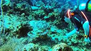 Scuba diver has incredible moment with two critically endangered sea turtles [Video]