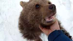 Russian family rescues bear cub from hunters [Video]