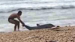 Watch: Heartbreaking footage shows man risking life in attempt to save beached dolphin [Video]