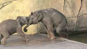Elephant calf tries to push his big brother into the water [Video]
