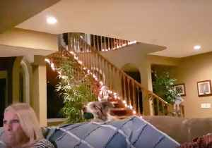 Clever Dog Comes Up With Game That Saves Owner Moving From Couch [Video]