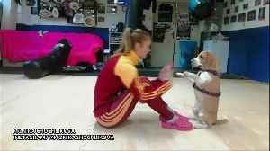 'High five!' Slovakian athlete shows off training with pet [Video]