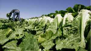 Romaine Multi-State E.coli Infections Is Over [Video]