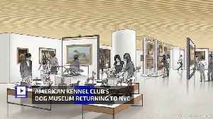 American Kennel Club's Dog Museum Returning to NYC [Video]