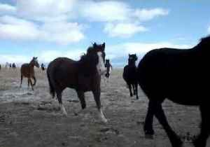 Horses Released to Winter Pasture at Montana Ranch [Video]