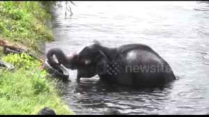 Trapped elephant rescued from canal using clever makeshift rope ladder [Video]