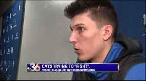 Cats trying to fight for 40 minutes [Video]