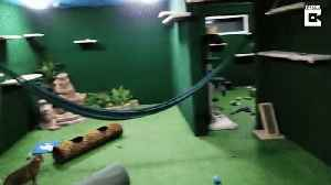 Purr-fect play area! Devoted brother spends £12,000 turning basement into ultimate cat jungle [Video]