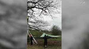 Purrfect Landing! Cat Stuck in Tree Jumps 20 Feet Onto Makeshift Trampoline [Video]