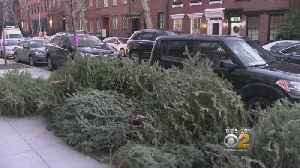 Discarded Christmas Trees Creating Sanitation Backlog In Streets Of NYC [Video]