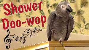 Parrot performs 'Doo-Wop' song in the shower [Video]