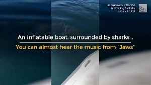 Sharks Circle, Boaters Bail [Video]