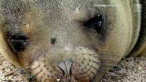 Why is Oregon Killing Sea Lions? [Video]