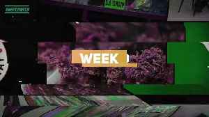 This Week in Weed: Can The Black Market Be Stopped? [Video]