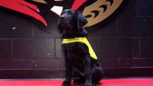 NHL's Ottawa Senators Training Guide Dog  [Video]