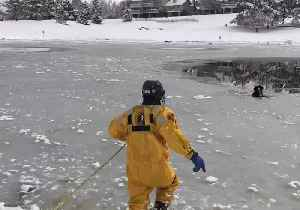 Dog Rescued After Falling Through Icy Pond Near Denver [Video]