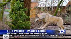 Free Wildlife Images Tours [Video]