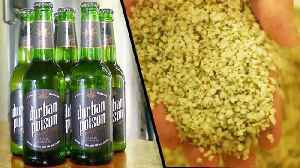 Beer Company Brews With Hemp Instead of Hops [Video]