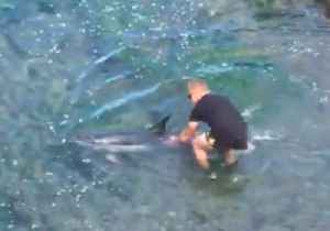 Good Samaritans Help Dolphins Trapped in Shallow Water [Video]