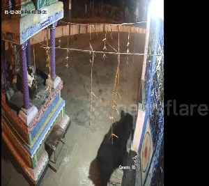 Boozing bear visits locked Indian temple looking for a swig of lamp oil [Video]